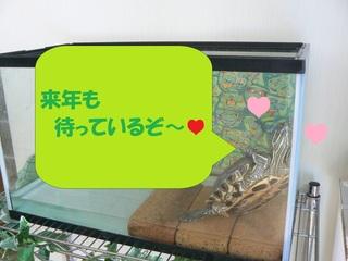 亀太郎.jpg